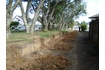 Monitored works within dripline of protected Pohutukawa trees