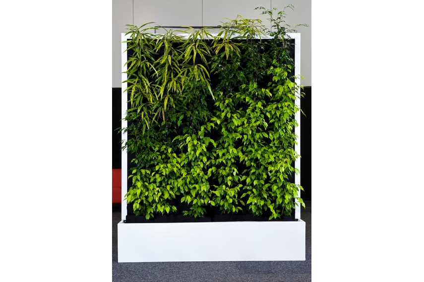 Freestanding mobile green wall.