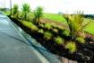 Living Earth rain garden mix